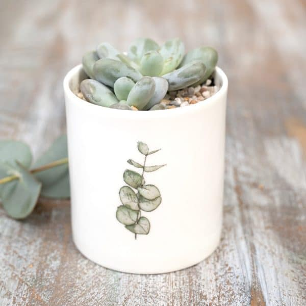 Plant & Garden Lover Gifts